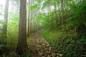 足柄千年古道ハイキング参加者を募集します