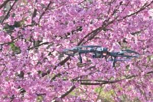 空から見る南足柄 「2018年桜の名所②(大口広場、大雄町花咲く里山、最乗寺、地蔵堂)」