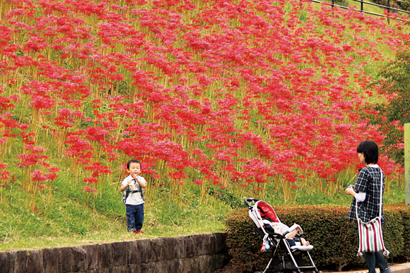 平成23年度南足柄市の観光写真コンクール佳作作品