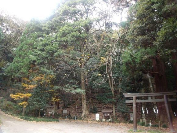 御嶽神社の社叢林