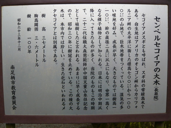 センペルセコイヤの大木説明板