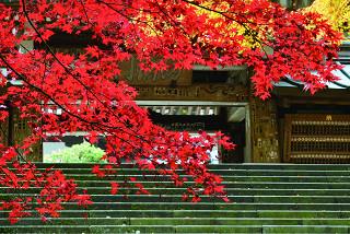 「瑠璃門の紅葉」