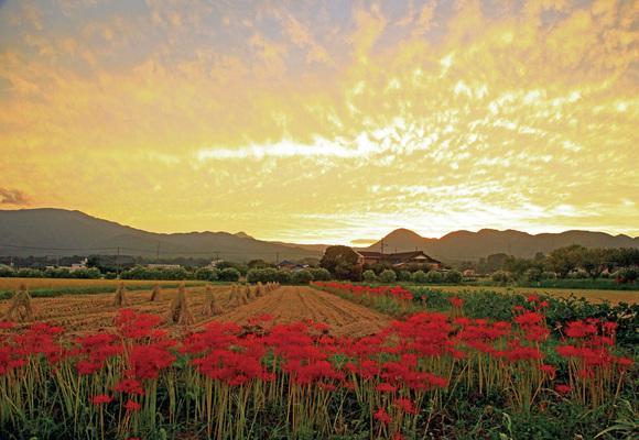 「夕日に染まる田園」