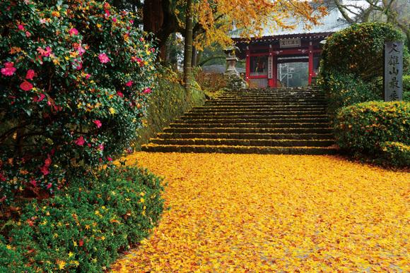 「秋色に染まる」
