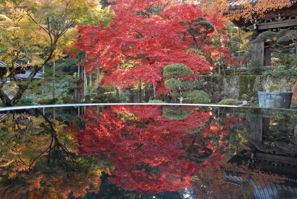 「水鏡の紅葉」