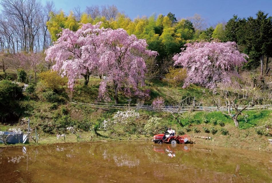 「里山の春」