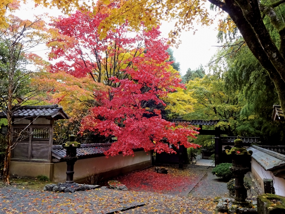 「秋の長泉院」