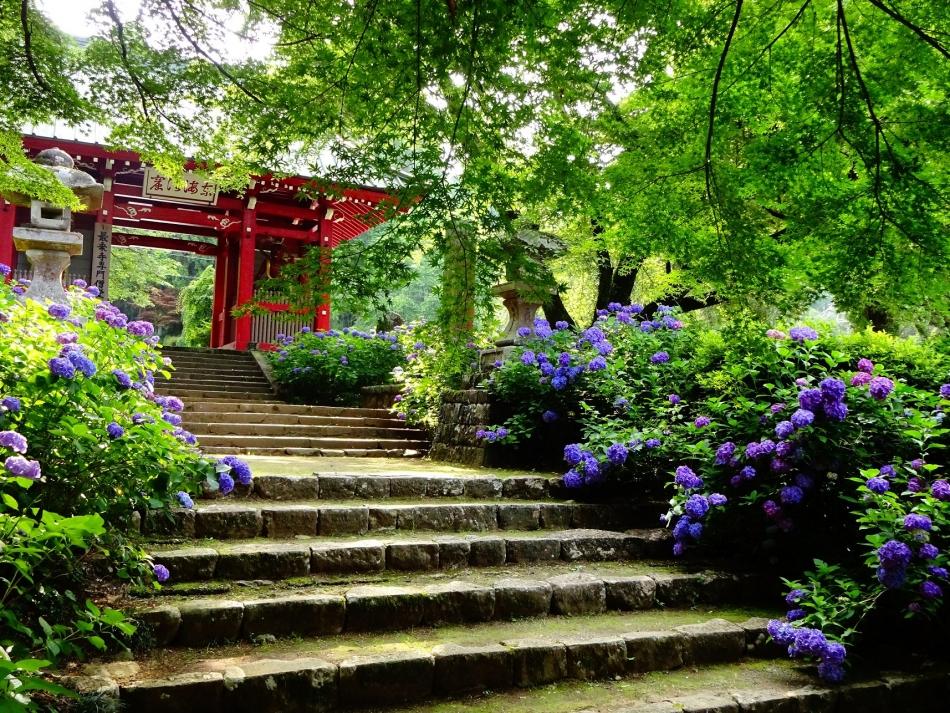 紫陽花咲く仁王門」
