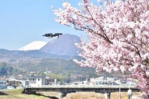 空から見る南足柄 「2018年桜の名所①(洞川、春木径・幸せ道、ふくざわ公園、一の堰ハラネ)」