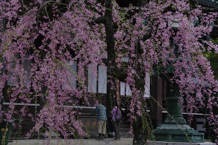 平成28年度南足柄市の観光写真コンクール佳作作品