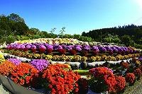 花咲く里山