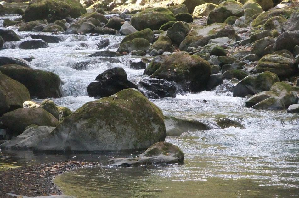 狩川の清流