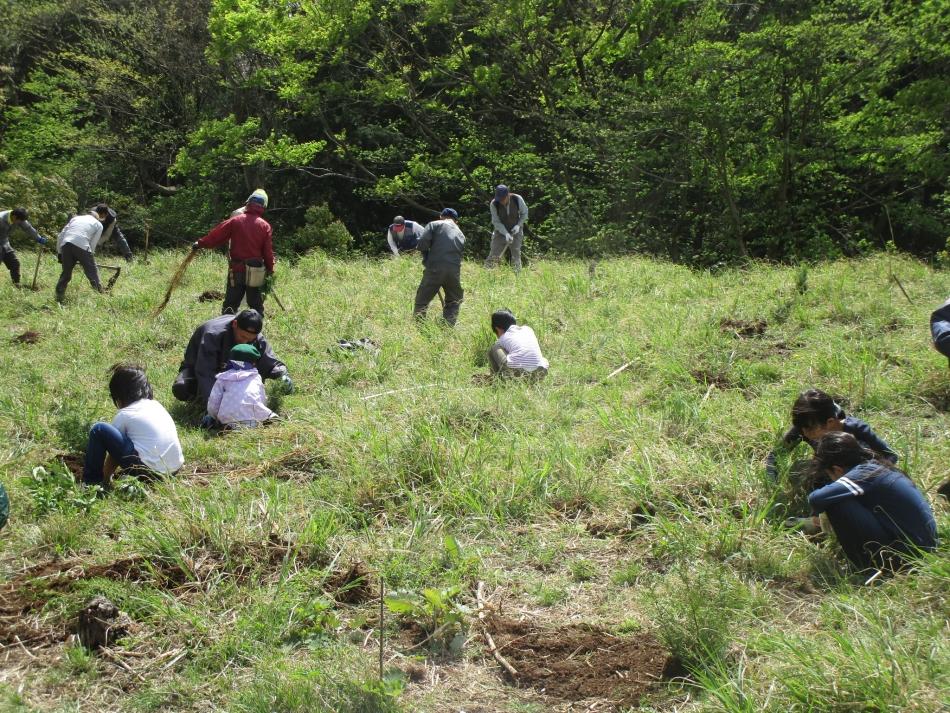 ヒノキの植樹活動